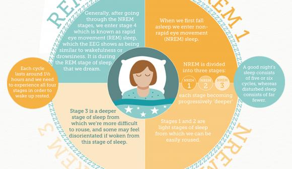 REM Sleep Cycle