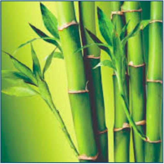 Bamboo mattress protectors